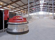 Cowhouse Prints - Automated Feed Pusher Print by Jaak Nilson