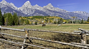 Fir Trees Photo Originals - Autum in the Tetons by David Jefferis