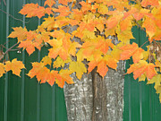 Pamela Turner Prints - Autum Leaves Print by Pamela Turner
