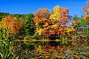 Adirondacks Photo Posters - Autumn - Fall Color Poster by Louis Dallara