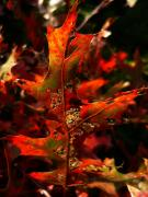 Backlit Leaf Prints - Autumn 6 Print by Jeff Breiman