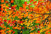Green Foliage Mixed Media Posters - Autumn Abstract Painterly Poster by Andee Photography