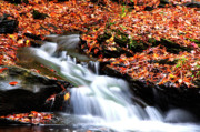 Mountain Stream Photo Posters - Autumn along Birch River Poster by Thomas R Fletcher