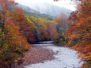 Williams River Scenic Backway Prints - Autumn along Williams River Print by Thomas R Fletcher