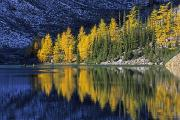 Door Reflections Posters - Autumn, Alpine Larch Trees, Lake Agnes Poster by John Sylvester