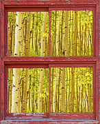 Fall Photos Posters - Autumn Aspen Trees Red Rustic Picture Window Frame Photos Fine A Poster by James Bo Insogna