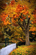 Edison Digital Art Posters - Autumn at Edison Birthplace Poster by Mary Timman