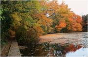 Mikki Cucuzzo Metal Prints - Autumn at the Lake Metal Print by Mikki Cucuzzo