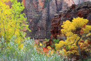 Zion National Park Posters - Autumn at the Sinawava temple Poster by Pierre Leclerc