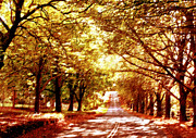Dappled Light Photo Posters - Autumn Avenue Poster by Linde Townsend