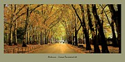 Postkarte Framed Prints - Autumn Avenue Framed Print by Liona Toussaint