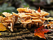 Forest Floor Prints - Autumn Beauties Print by Barbara McMahon