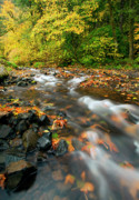 Columbia River Prints - Autumn Beneath Print by Mike  Dawson