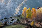 Bulgaria Metal Prints - Autumn Birches Metal Print by Evgeni Dinev