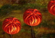 Pumpkins Digital Art - Autumn Blooms by Paul St George