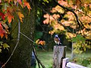Hovind Posters - Autumn Blue Bird Poster by Scott Hovind
