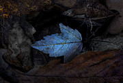 Forest Floor Posters - Autumn Blue Poster by Ron Jones