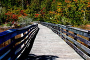 Alabama Posters - Autumn Boardwalk in Alabama Poster by Carol Groenen