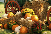 Locally Grown Digital Art Prints - Autumn Bounty Print by Kathy Clark