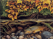 Fly Fishing Painting Posters - Autumn Brown Trout Poster by JQ Licensing