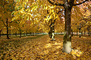 Where To Buy Magic Autumn Color On Canvas Posters - Autumn Poster by Bruno Santoro