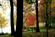 Pleasant Remembrances Posters - Autumn by the Lake Poster by Douglas Barnett