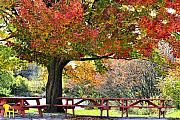 Tables Framed Prints - Autumn By The River On 105 Framed Print by Deborah Benoit
