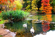 Swan Lake Posters - Autumn by the Swan Lake Poster by Dora Sofia Caputo