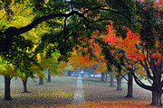 Autumn Canopy Print by Lisa  Phillips