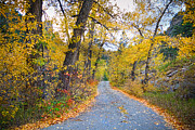 Autumn Prints Prints - Autumn Canyon Colorado Road Print by James Bo Insogna