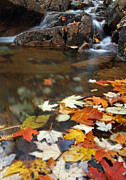Down East Maine Art - Autumn Cascade by Juergen Roth
