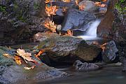 Fall Leaves Posters - Autumn Cascades Poster by Mike  Dawson