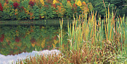 Panoramic Digital Art - Autumn Cattails Lake by Thomas R Fletcher