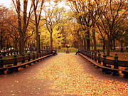 Central Park Landscape Prints - Autumn - Central Park - New York City Print by Vivienne Gucwa