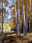 Autumn Chama New Mexico Print by Kurt Van Wagner