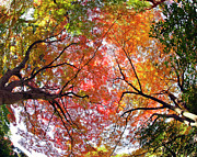 Autumn Color Print by Shuya Seno Photography