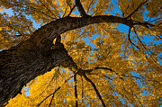 Elm Photos - Autumn Colors 4 by Terry Elniski