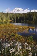 Reflection Of Tree Prints - Autumn Colors At Reflection Lake And Print by Craig Tuttle