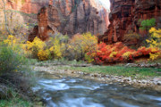 Virgin River Prints - Autumn Colors at Sinawava temple  Print by Pierre Leclerc