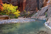 Zion National Park Posters - Autumn colors in the Virgin Narrows in Zion Poster by Pierre Leclerc