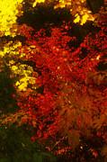 Autumn Colors Print by Jeff Breiman