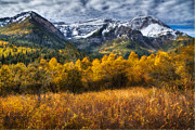 Evergreens Posters - Autumn Colors on Mount Timpanogos Poster by Utah Images