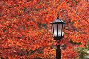 Streetlamps Posters - Autumn Colors On The Leaves And A Light Poster by Craig Tuttle