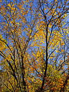 Fall Leaves Posters - Autumn Colors Poster by Stephen Anderson