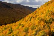 Autumn Foliage Prints - Autumn Colours At North Mountain Print by John Sylvester