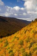 Autumn Foliage Photos - Autumn Colours, Cape Breton Highlands by John Sylvester