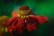 Kasia Dixon - Autumn Colours