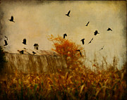 Rural Digital Art - Autumn Cornfield by Gothicolors With Crows