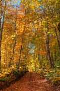 Maritimes Prints - Autumn Country Road Print by Matt Dobson