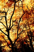 Trees - Autumn Cover by Cathie Tyler
